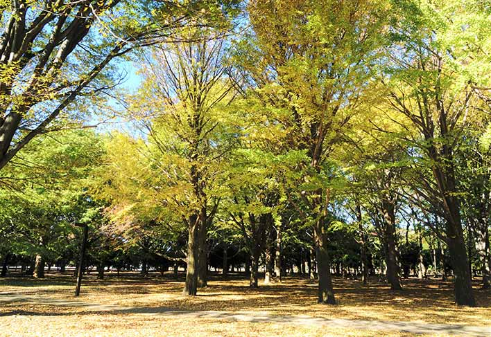 現在の代々木公園の様子